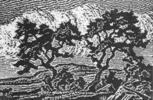 B021 Poplars 1918 nailcut