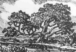 L109 Old Willow 1925 lithograph